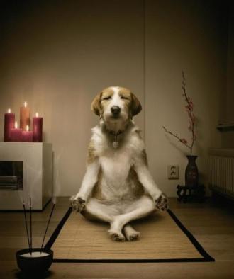 doge-meditating-e1390673913686_580-0